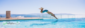 man-jumpinhg-into-pool_1303-14422